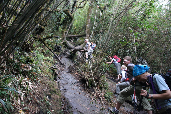 Path through the jungle - Climbing Fansipan – highest peak of Indochina