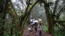 Āfrikas Kilimandžaro un safari Ekspedīcija