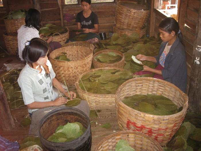 Myanmar_20101116_2520