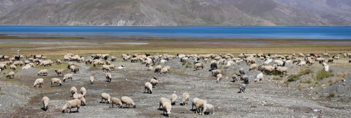 Tibet_1369_1