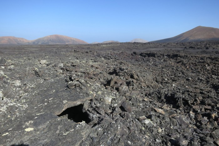 Canaries_0954_1