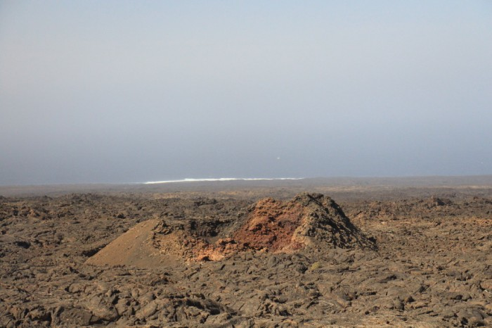 Canaries_0974_1