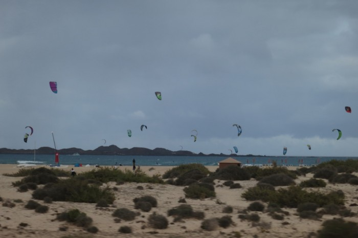 Canaries_0402