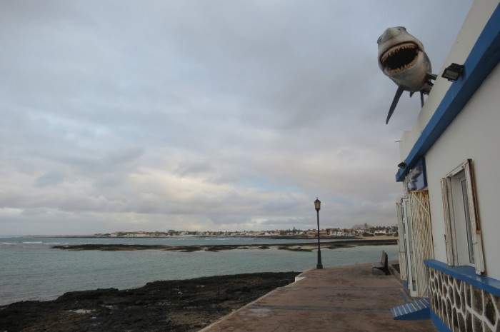 Canaries_0411