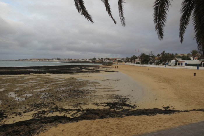 Canaries_0418