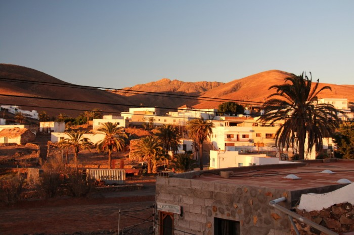 Canaries_2234