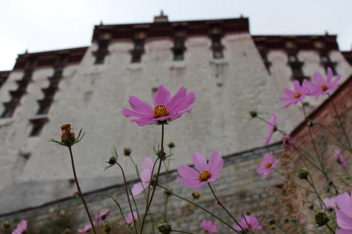 Tibet_0714