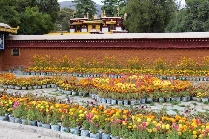 Tibet_1159