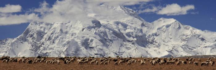 Šišapangmas pakājē, Tibetā