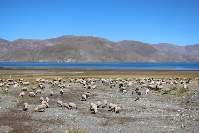 Tibet_1369