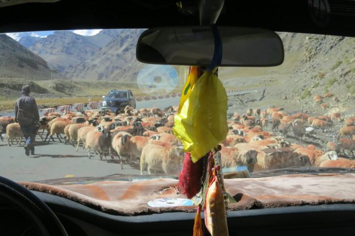 Tibet_1375
