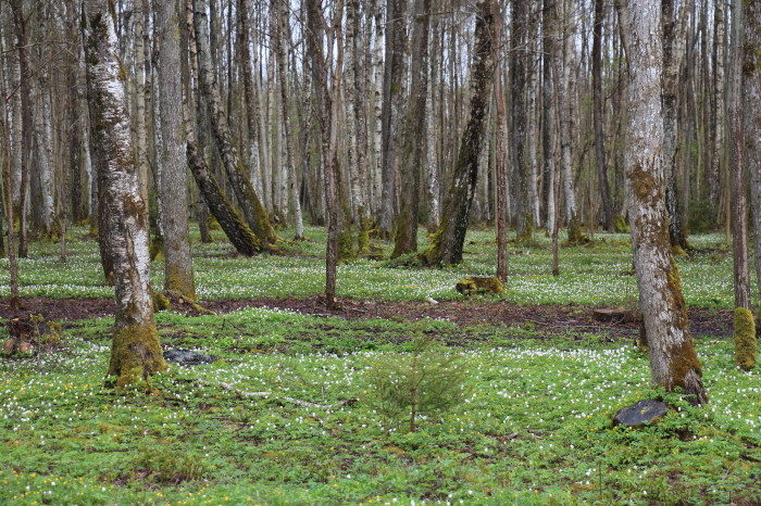 Saaremaa_116