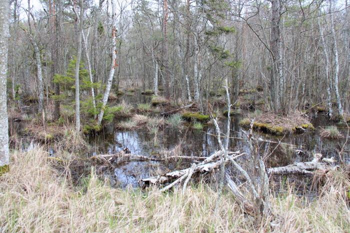 Saaremaa_312