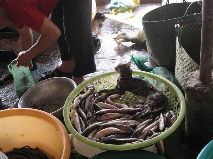 Vietnam11_0254e